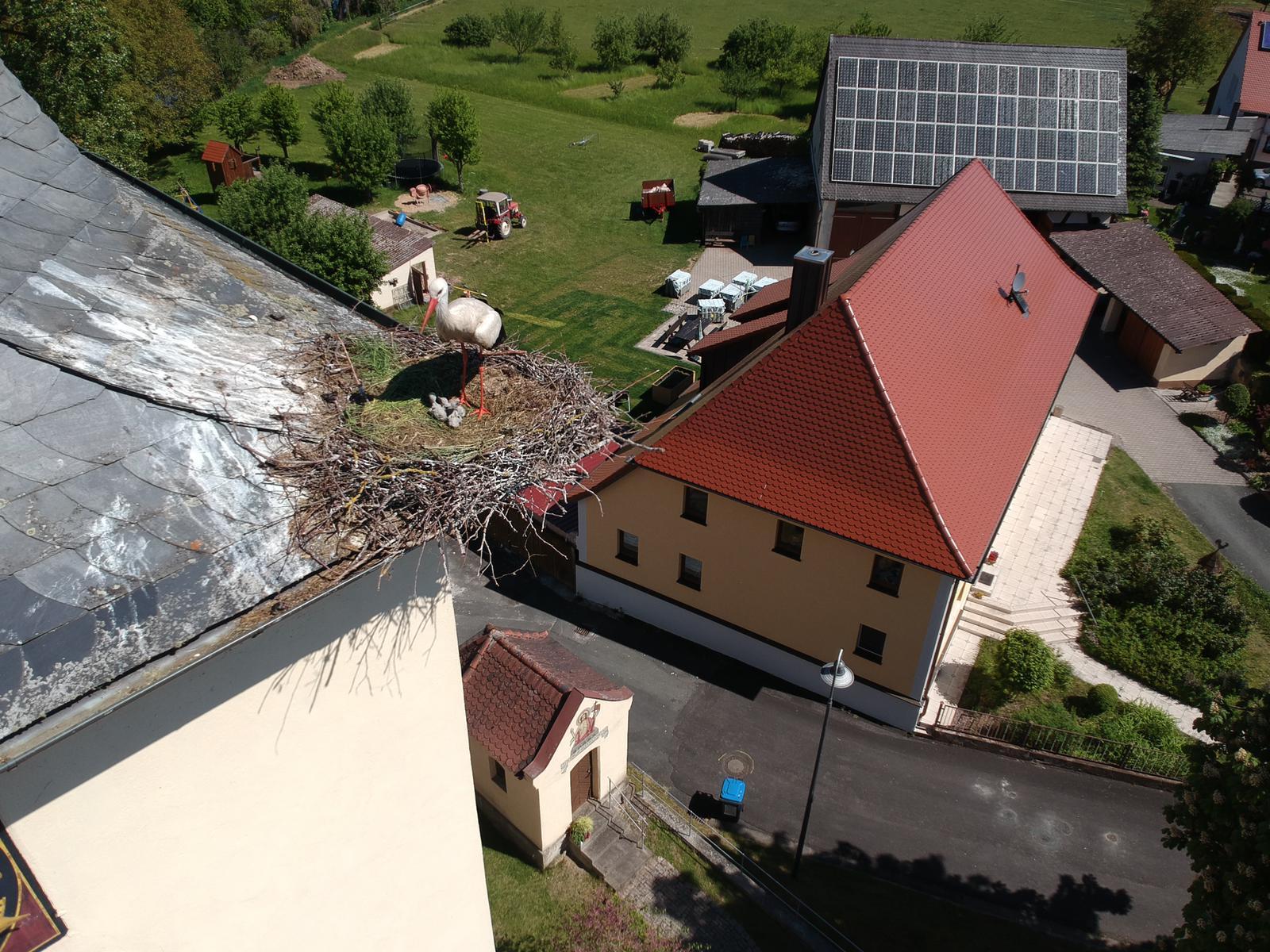 Störche auf Willersdorfer Kirchdach haben Nachwuchs